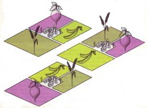 rotazione delle colture biologiche