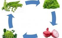 Con gli ortaggi biologici la rotazione è fondamentale.